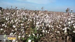 Cotton Outlook 2016