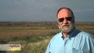 Salt Cedar Damage In The High Plains