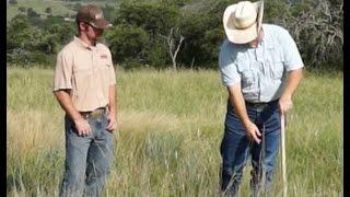 Stocking Rate To Benefit Cattle & Quail 2