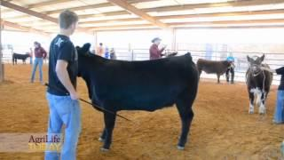 AgriLife Today - 2012 East Texas Star Show Series
