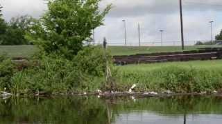 Dickinson Bayou Watershed & Water Quality