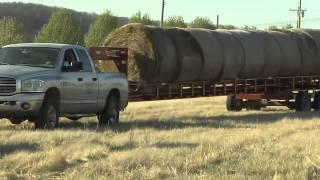 The Hayroll Trailer From GoBob Pipe & Steel