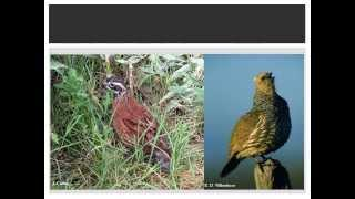 Techniques For Counting Quail